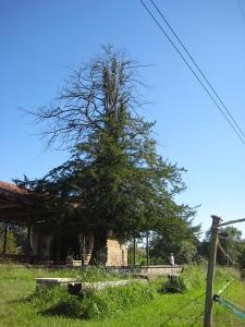 257 Ermita mit Eibe 461